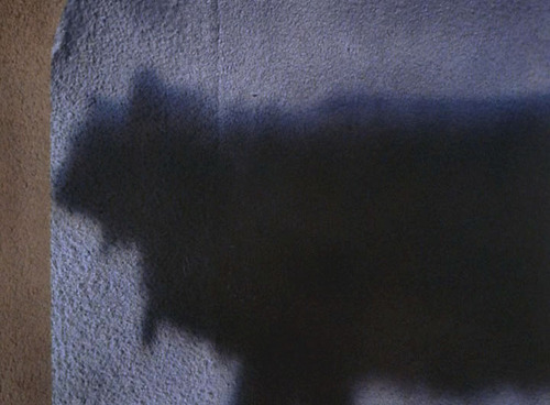 Shadow of a cat on the wall