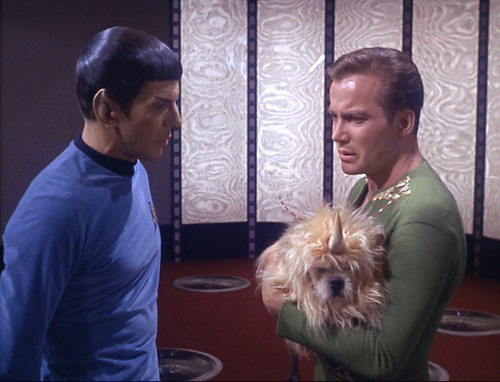 Kirk holds the unicorn dog and talks to Spock in the transporter room
