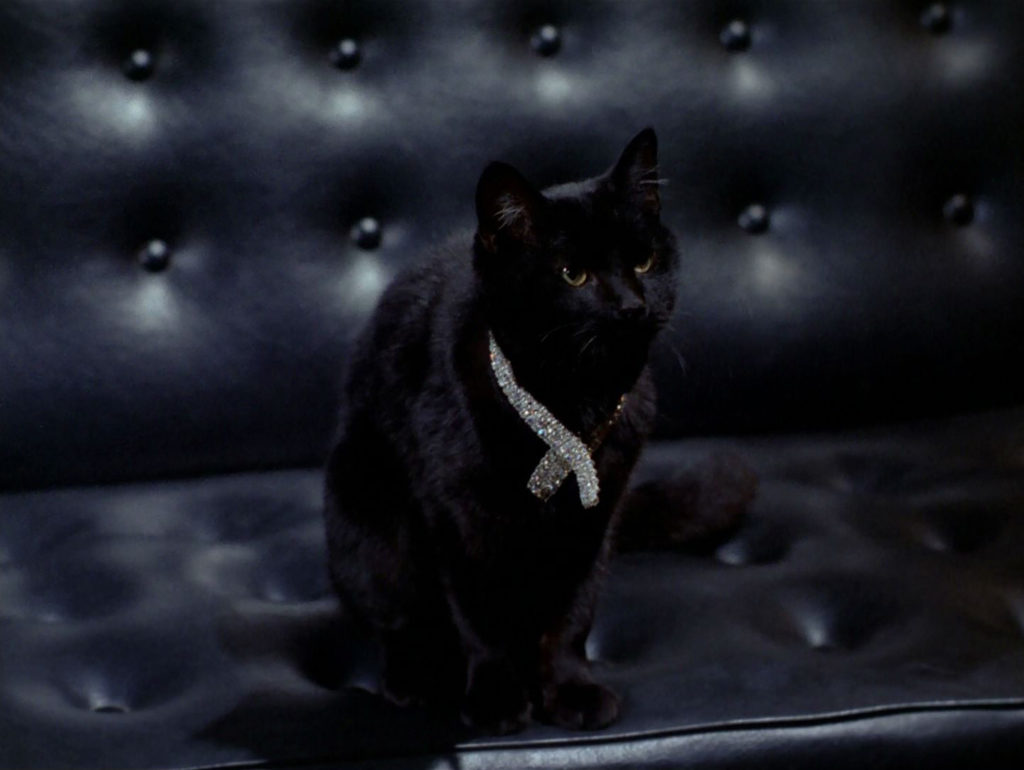 Isis the cat in her jewelled collar on the sofa